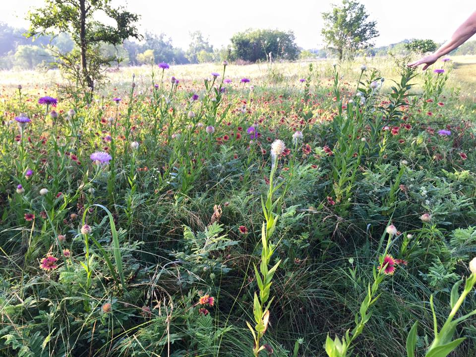 Wildflowers at Clear Creek Natural Heritage Center